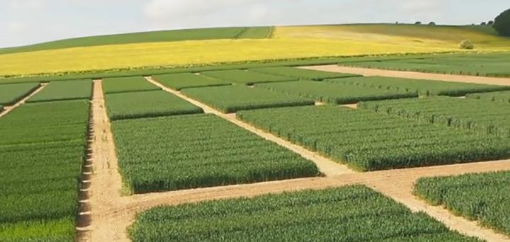 Agrii   Agri intelligence   agronomy services   strategic advice