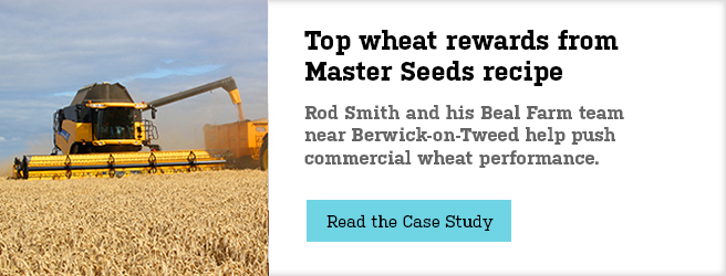 Top wheat rewards from Masterseeds recipe