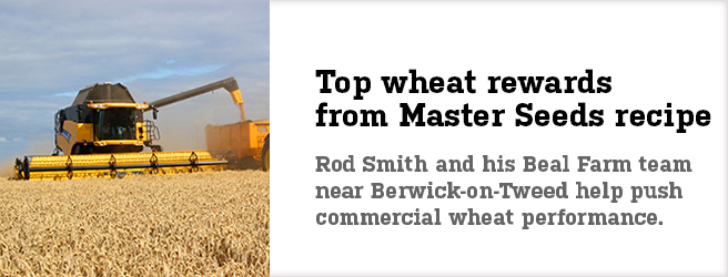 Top wheat rewards from Master Seeds recipe