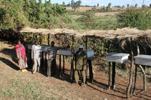 Modern beehives in Nou Forest, Tanzania.
