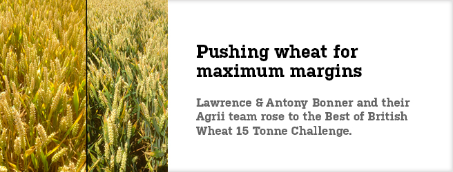 Pushing wheat for maximum margins