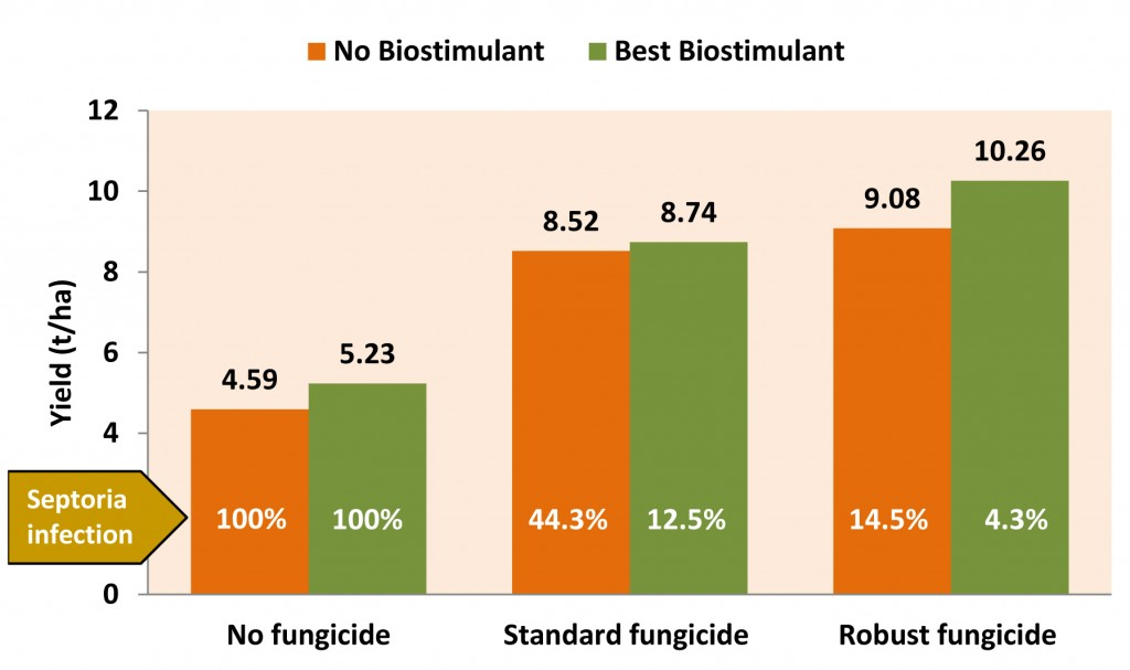 Figure: Biostimulant Effects on Wheat Yield and Septoria Infection