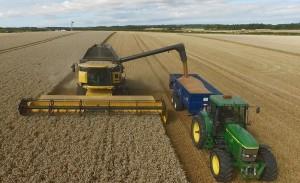 Harvesting Dickens