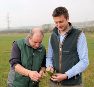 Mark Moderski (L) and Todd Jex check for wheat disease