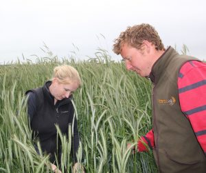 David Lord and Vicki Brooks check winter rye 2