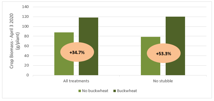 Figure 3: Buckwheat Value